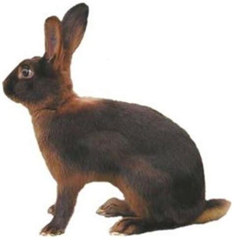 Rabbitt Hutches Thrianta Rabbits Usa Rabbit Breeders