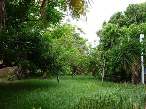 imagenes verdes paisajes fondos de paisajes verdes imagui