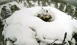 snow flurries weather uk weather late winter temperatures bring snow flurries