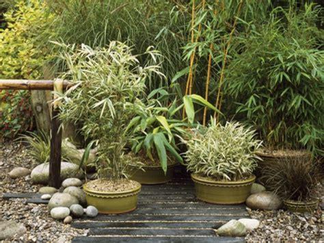 Japanese Container Garden - asian inspired container garden
