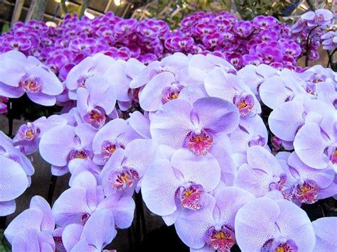 imagenes de flores hermosas orquideas hermosas orqu 237 deas fondos de pantalla gratis