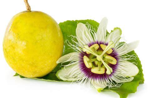 fruits n passion vente fruits de la passiflora