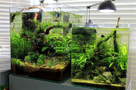 eheim aquastyle  images aquarium design aquascape