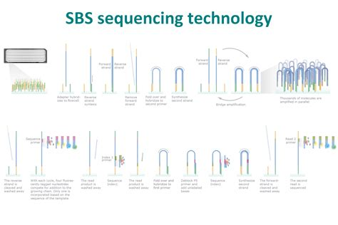 illumina whole genome sequencing sequencing technology sequencing by synthesis autos post