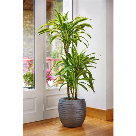 Plante Verte D Appartement Photo by Superior Plante Verte D Interieur 6 Photos De