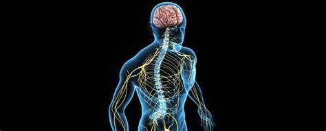 what does the color run support central nervous system cns myvmc