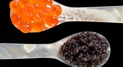 the best caviar caviar tips how to recognize the best caviar