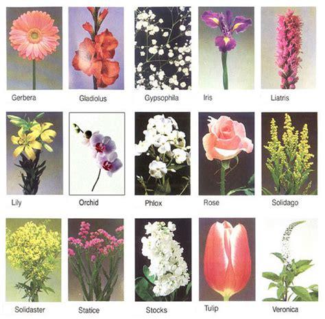 flowers  flower lovers flowers names