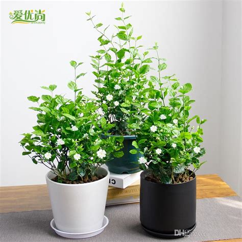 indoor small plants 2018 small indoor flowers seeds potting balcony beauty