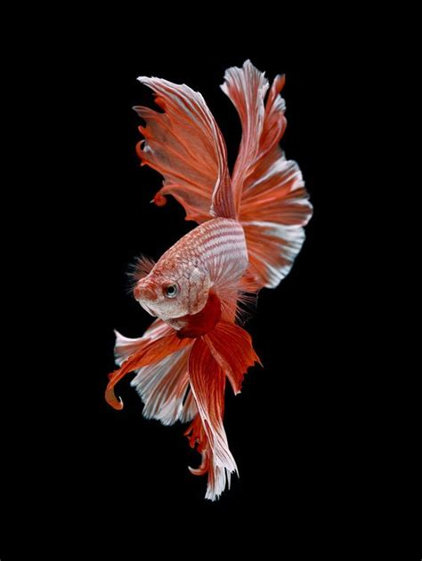 refreshing fascinating and pretty fish photography