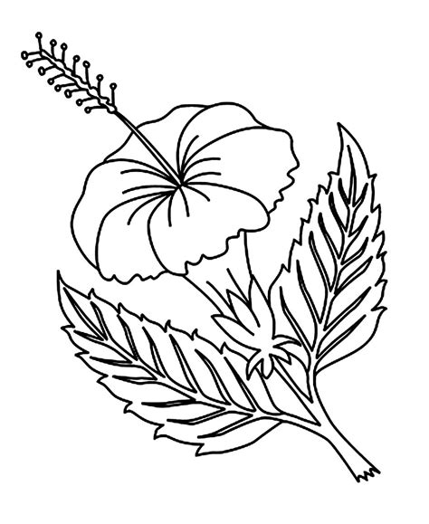 coloring page with flowers free printable hibiscus coloring pages for