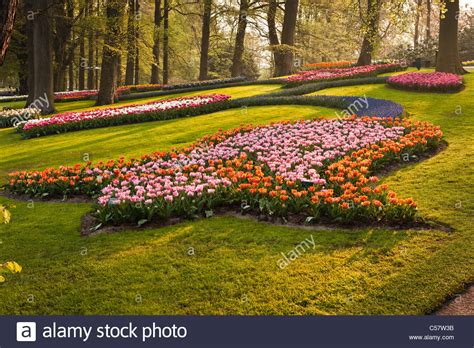 flower garden netherlands pink tulips in keukenhof flower garden netherlands stock