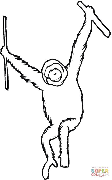 Outline Drawing Orangutan by Orangutan Ape Coloring Page Free Printable Coloring Pages