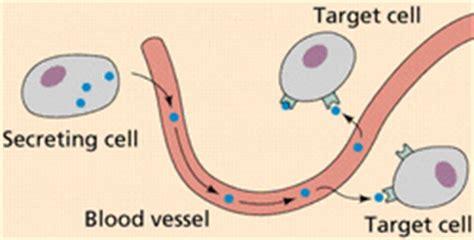 v protein djelovanje endocrine system s anatomy and physiology