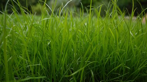 green grass wallpaper download green grass wallpaper 1920x1080 wallpoper 401245
