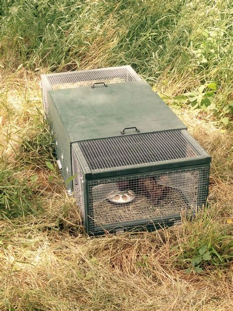 johnny house keeping quail to train your bird dog