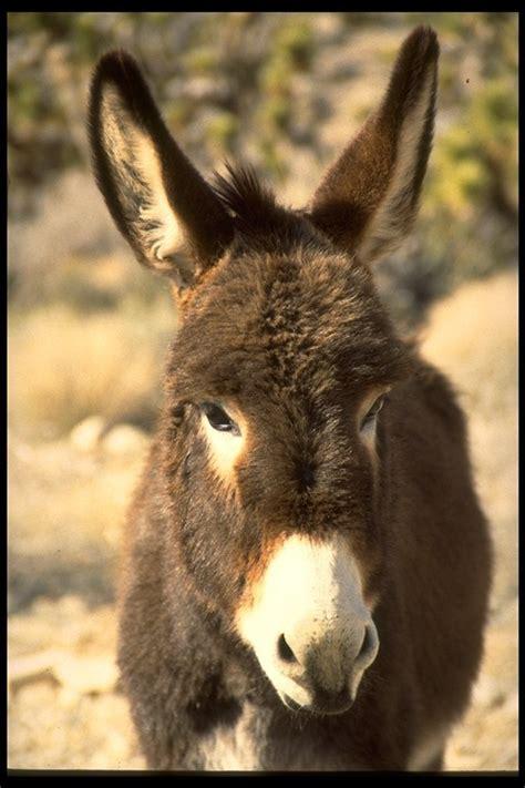 Burro Animal did a burro commit animal rights zone