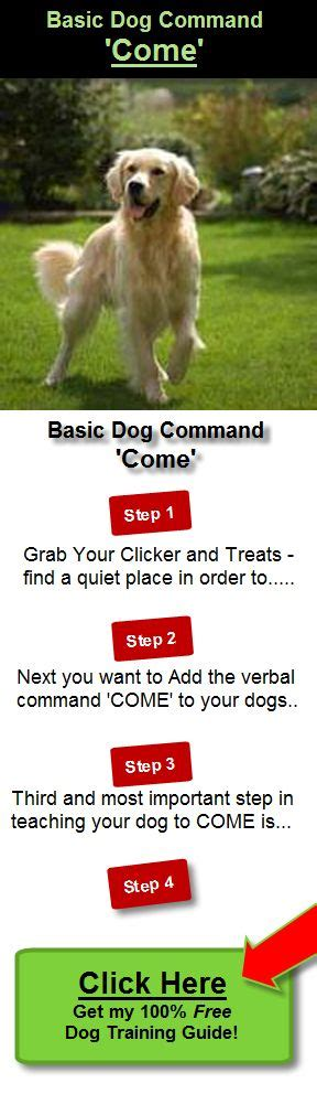 how to your to come on command to come basic command learn how to teach your to come in 3 simple and