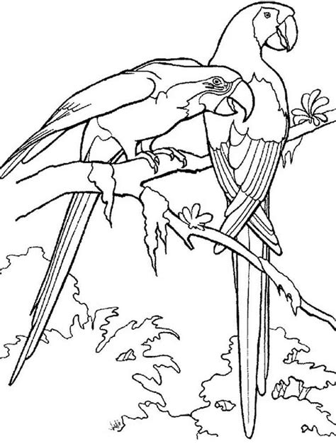 macaw bird coloring page parrot coloring pages download and print parrot coloring