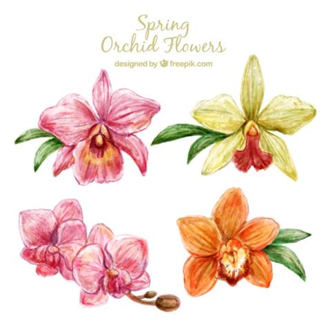 cute orchid flowers design vector free download