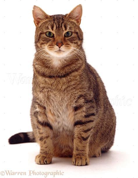 image gallery sitting cat
