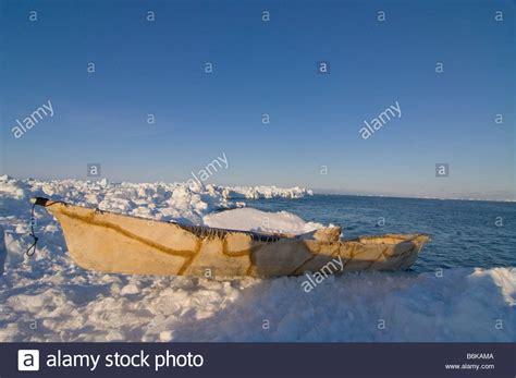 umiak boat umiak skin boat stock photos umiak skin boat stock
