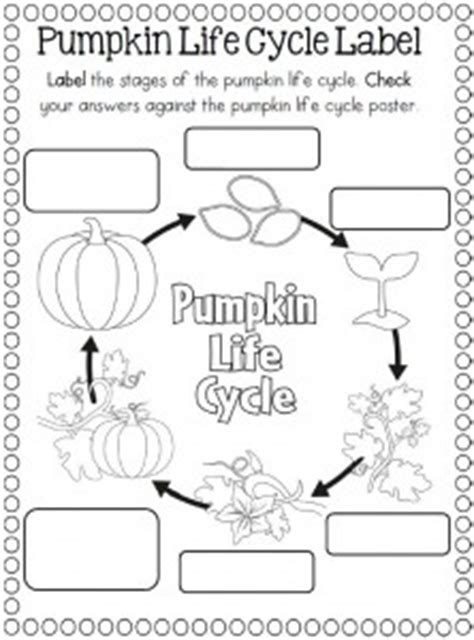 life cycle of a pumpkin coloring page life cyle pumpkin colouring pages