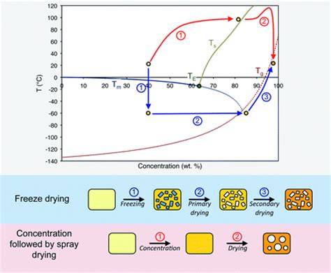 freeze drying phase diagram soft matter approaches to structured foods from cook and look to rational food design