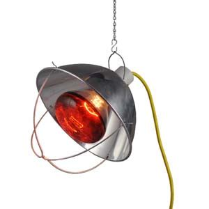 heat l bulb for chickens basic brooders hanging heat l brooder