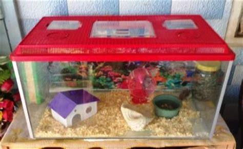 Pasir Zeolit Aquarium apa saja si yang dibutuhkan sebelum memelihara hamster
