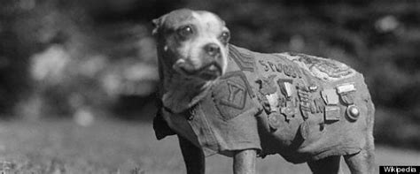 Sergeant Stubby Medals In America One Of The Most Decorated Animals Is A Named Sgt Stubby Who Served In 17 World