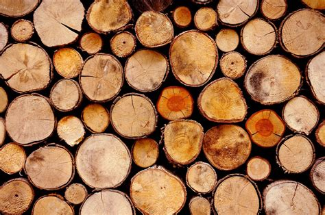 what is the best type of wood to burn in your fireplace