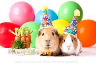 Happy Birthday Guinea Pig Card Happy Birthday Wishes From The Guinea Pigs Guineapigs
