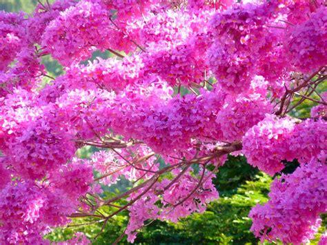 Sale Murah P Da Alma 17802 o pantaneiro poema majestoso ip 202 florido