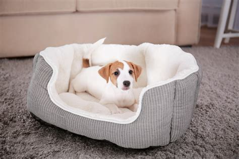 best dog couch best dog beds 2017 the top 8 you should invest in