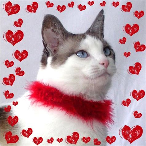 cat valentines catsparella 10 cat themed s day gift ideas for