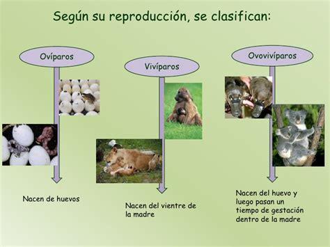 imagenes de animales oviparos viviparos y ovoviviparos los animales