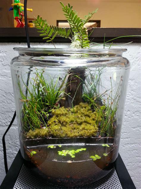 Sho Karpet java moss aquascape aquascape exles aquascapers