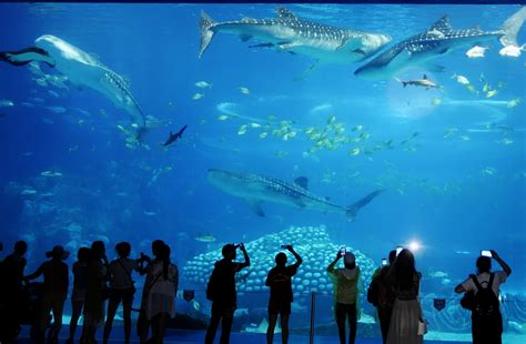 world best largest and best aquariums in the world 2018 top 10