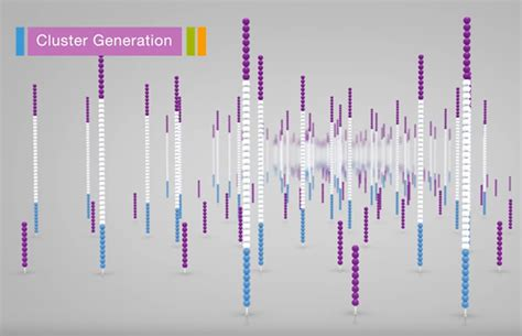 illumina sequence hla sequencing hla typing by ngs