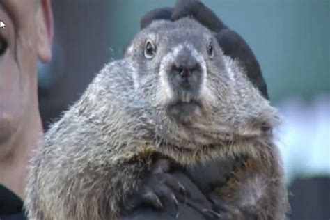 groundhog day weather report groundhog day forecast early poor investing climate