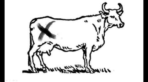 click clack moo free coloring pages coloring home