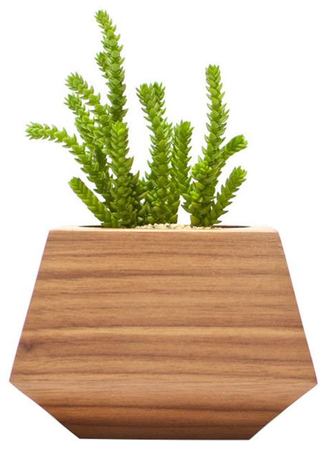 two plants in modern wooden pots plant pots pinterest revolution design house boxcar single reviews houzz