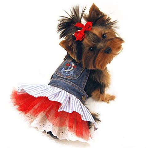 clothes for yorkies yorkie clothes clothing for your terrier breeds picture