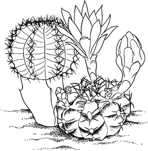 cactus flower coloring page big cactus flower coloring pages big cactus flower