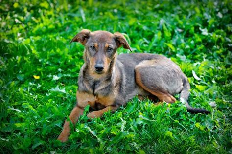 difficult and blood in stool in dogs symptoms