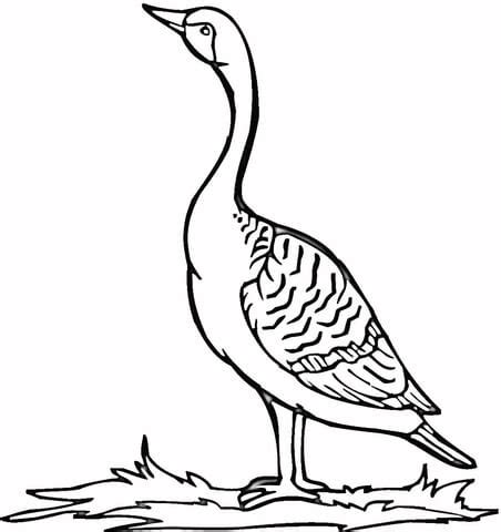loon lake coloring pages