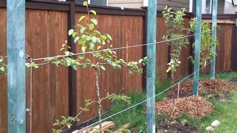 Backyard Fruit Orchard by Backyard Fruit Orchard Part 2