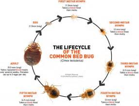 gallery gt pill bug cycle