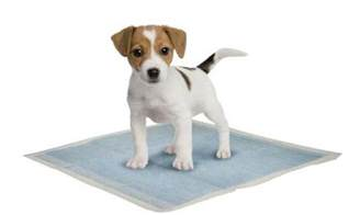 top 5 best puppy potty pads for toilet top tips